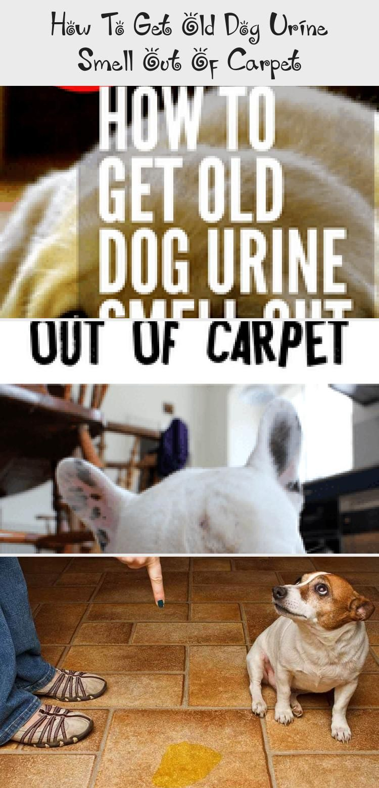 How To Get Old Dog Pee Smell Out Of Carpet Whole House Smell Like Dog Urine It S Probably In The Carpet Check Out These Pet Dog Urine Old Dogs Dog Pee