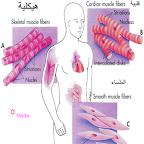 بيولوجيا الانسان جهاز الاعصاب Human Biology The Nervous System Peace Gesture Peace Blog Posts