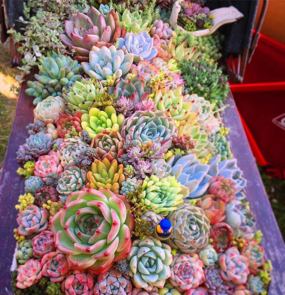Photo of How to Care for Succulents Indoors