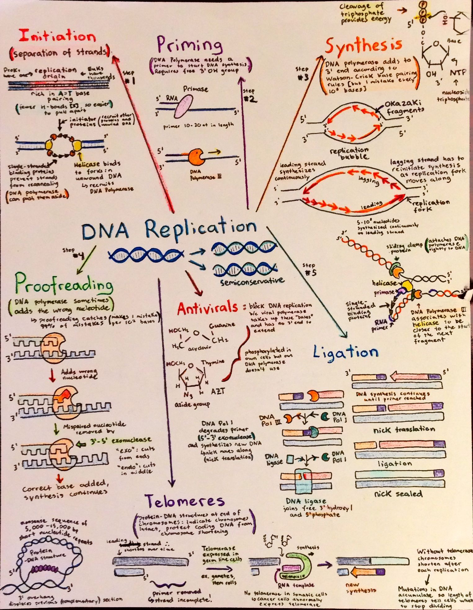 introductory biochemistry flowcharts dna biology and science introductory biochemistry flowcharts more l dna replication