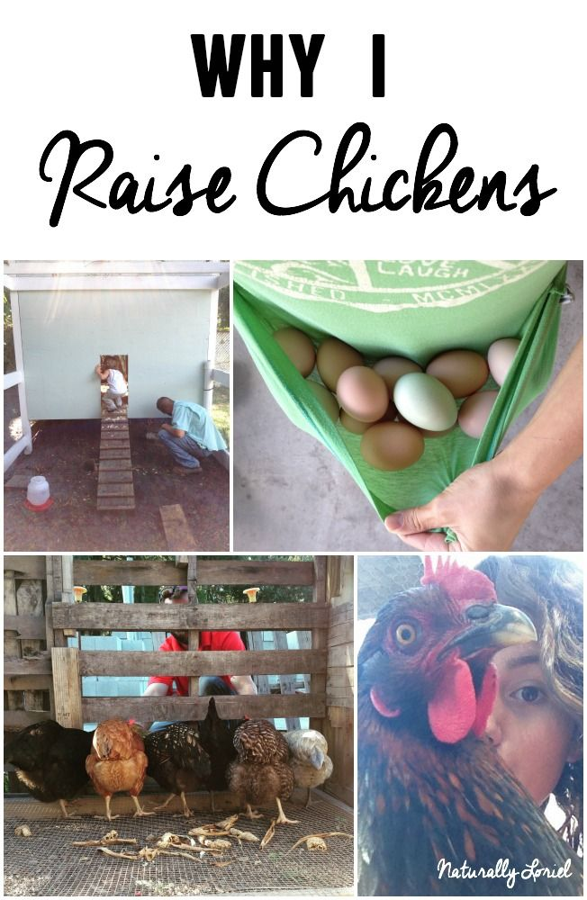 Although there are so many reasons why I raise chickens ...