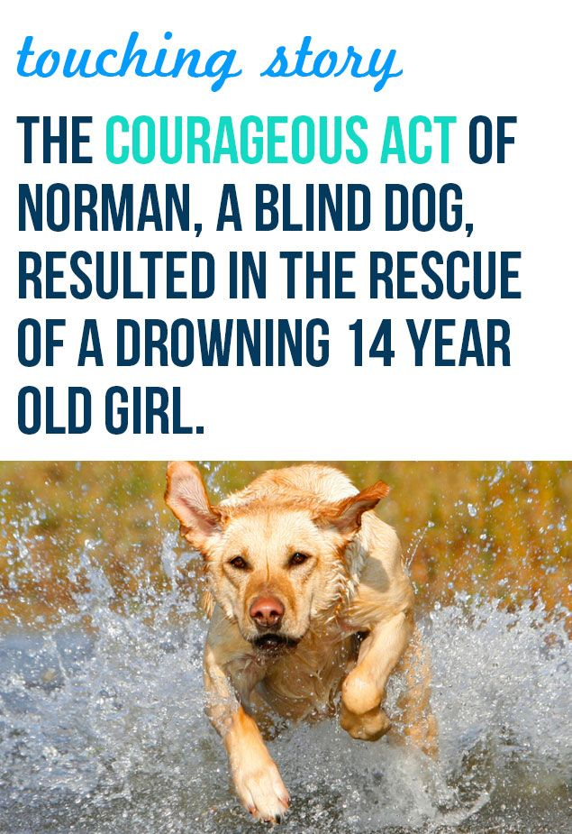 Further proof that dogs are one of the greatest animals on earth