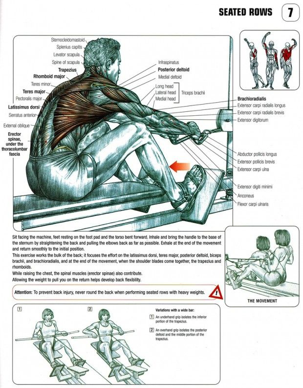 The ANATOMY of Wide Grip and Close-Grip Seated Cable Row   Love My ...