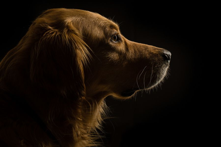 Profile View by Ingo Meckmann, via 500px