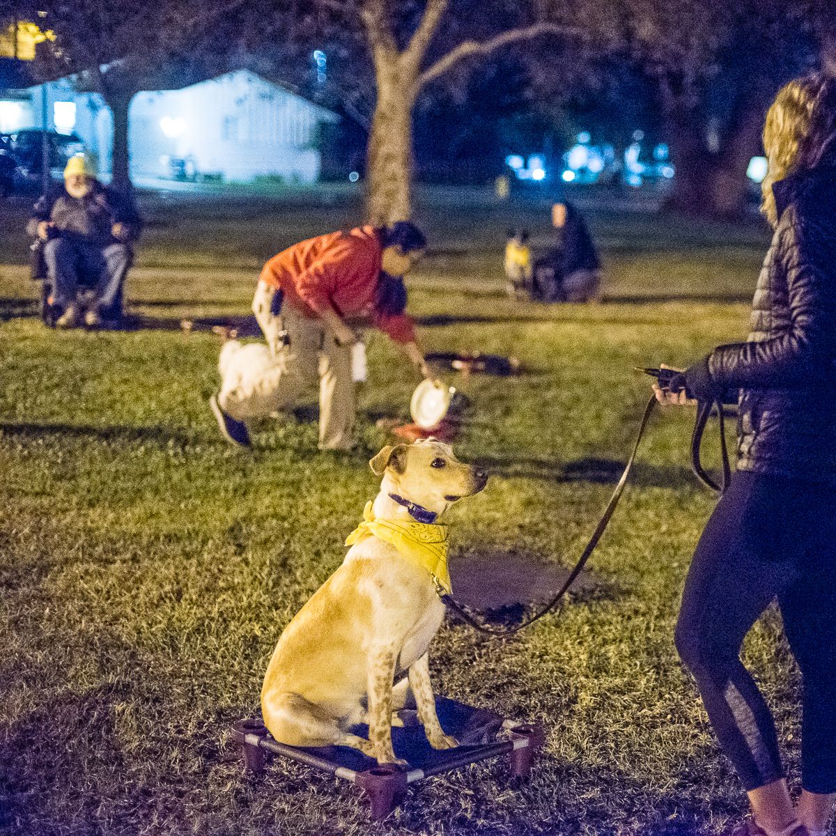 Evening Group Classes Love Dog Training In California Sit Means