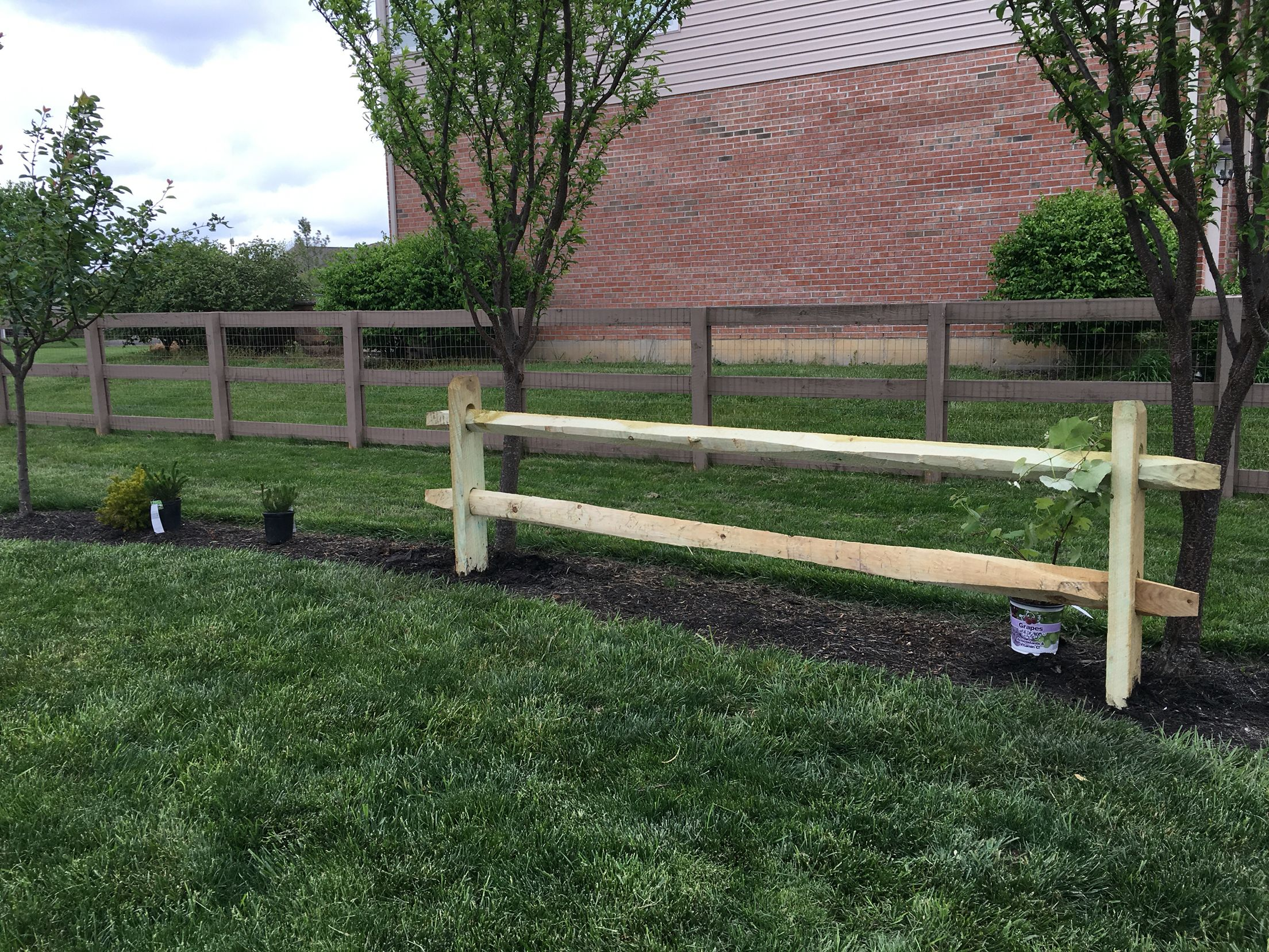 Split Rail Fence To Train Grape Vine On