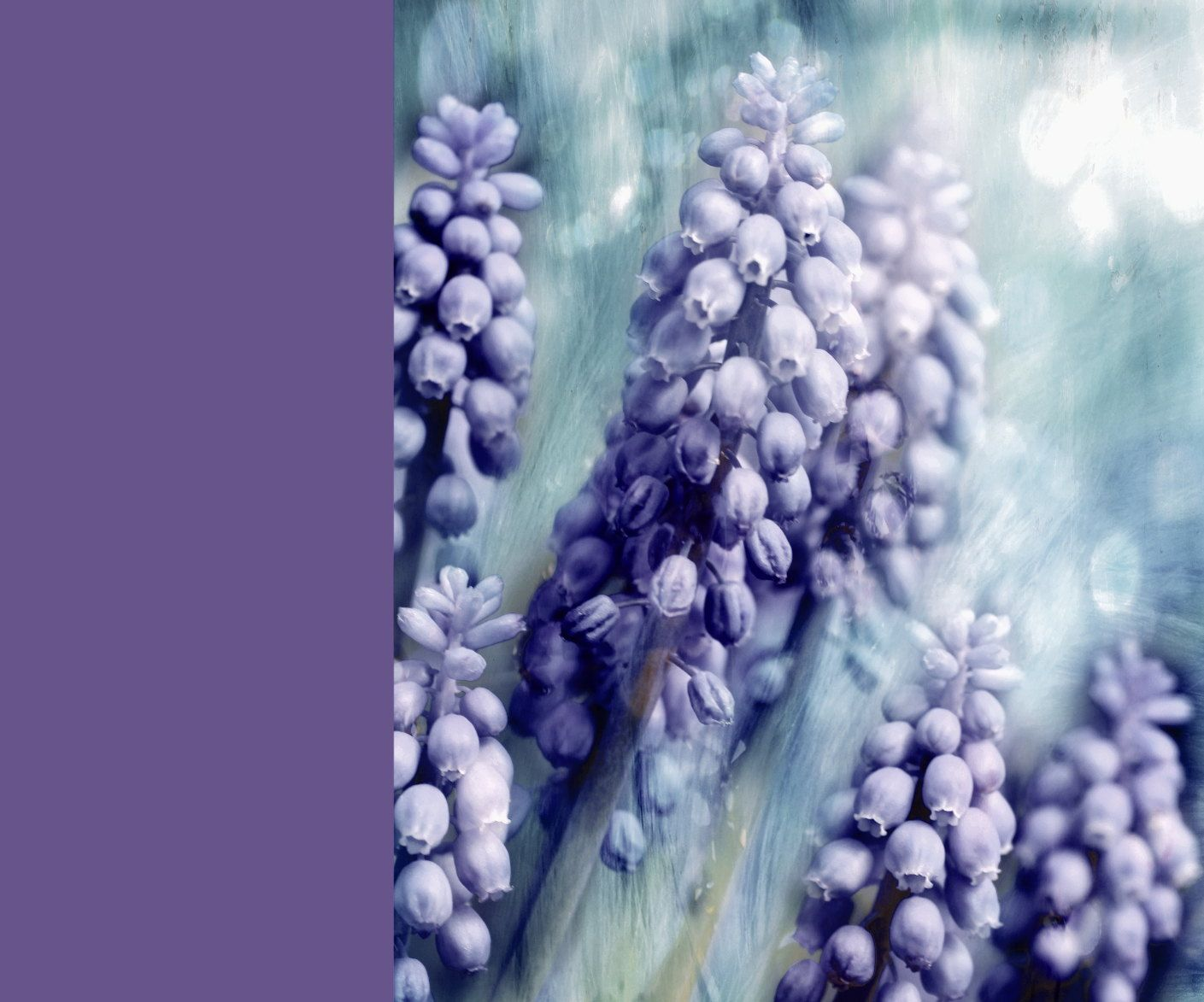 Lush Lavender by Anne Costello on 500px