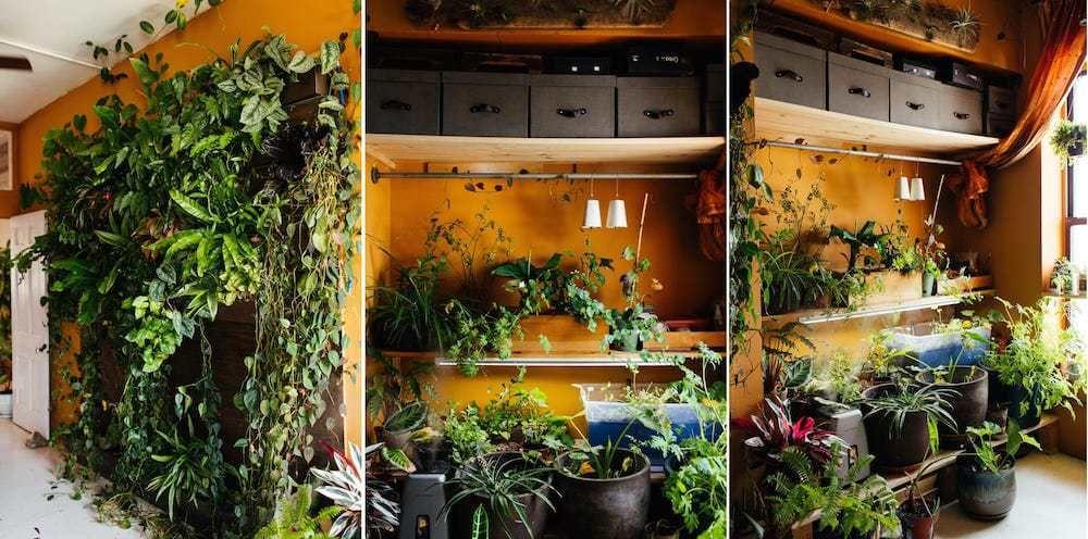 Conoce A La Americana Que Tiene 150 Tipos Difees De Plantas En Su Piso 111 M2 How To Grow Plantsapartment