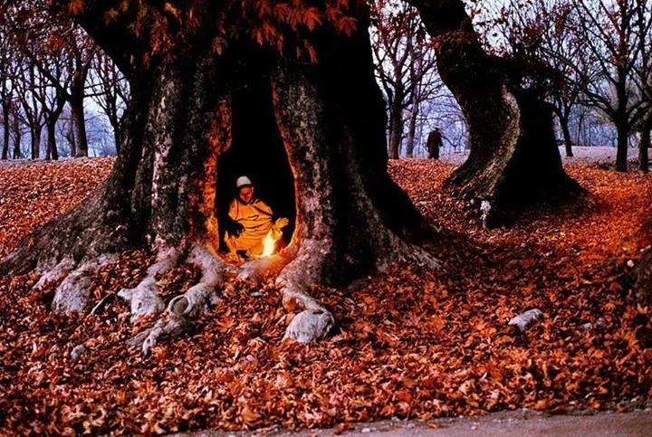 Warming inside the trunk of a Chinar Tree during the winter season in Kashmir!