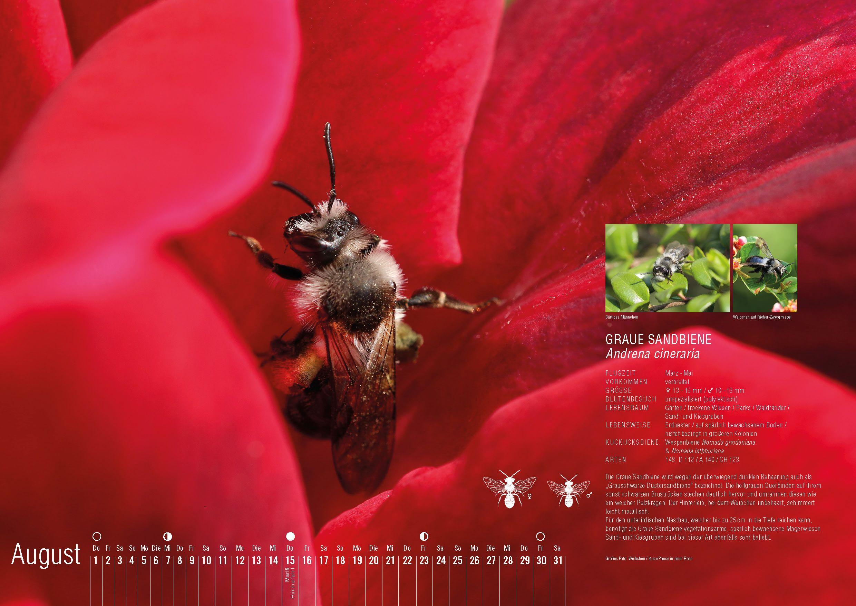 Pin Von Anja Eder Auf Wildbienen Kalender 2019 Wildbienen Bienen Wild