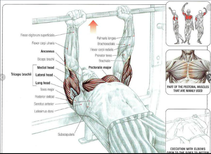 Bench Press Muscles Used Muscle Building Workouts Big