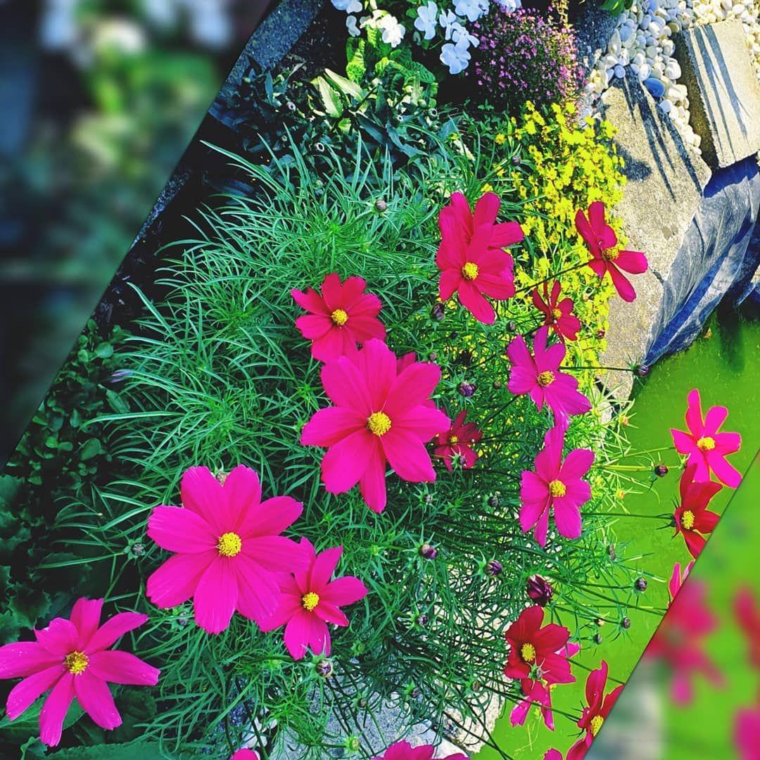 Sonntag Sommer2019 Sommertime Sommersonnesonnenschein Nichtstun Nichtsmachen Relax Entspannung Entspa Sommerblumen Gartenliebe Garten