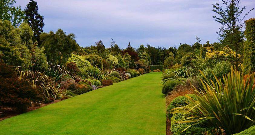 New Zealand Perennials