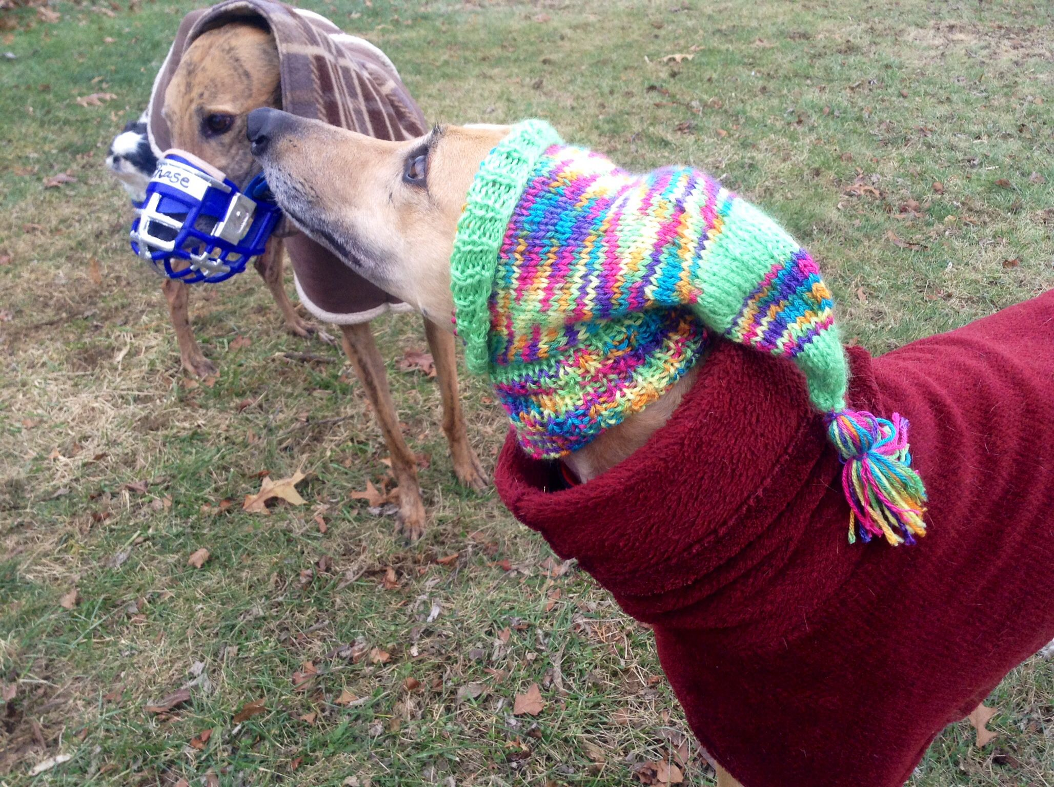 2c6c2a0b5fb I knitted this hat for my greyhound. There is a free pattern on Ravelry.