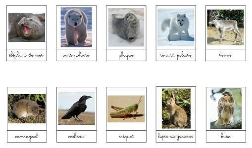 A La Douce Les Animaux Et Leurs Lieux De Vie Animaux Montessori Orthographe Illustree