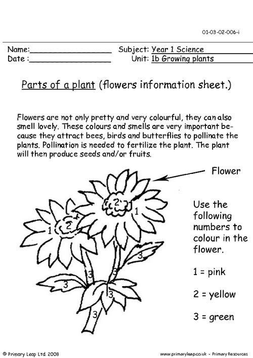 PrimaryLeap.co.uk - Parts of a plant - flowers information sheet ...