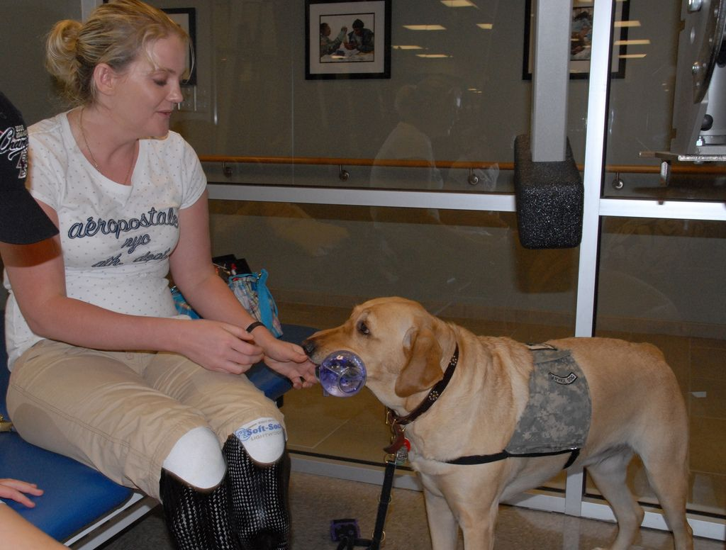 Train Your Service Dog Without A Professional Trainer Service