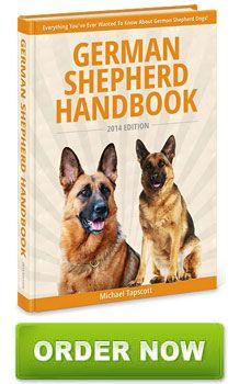 Alsatian Or German Shepherd Dog What Is The Difference With