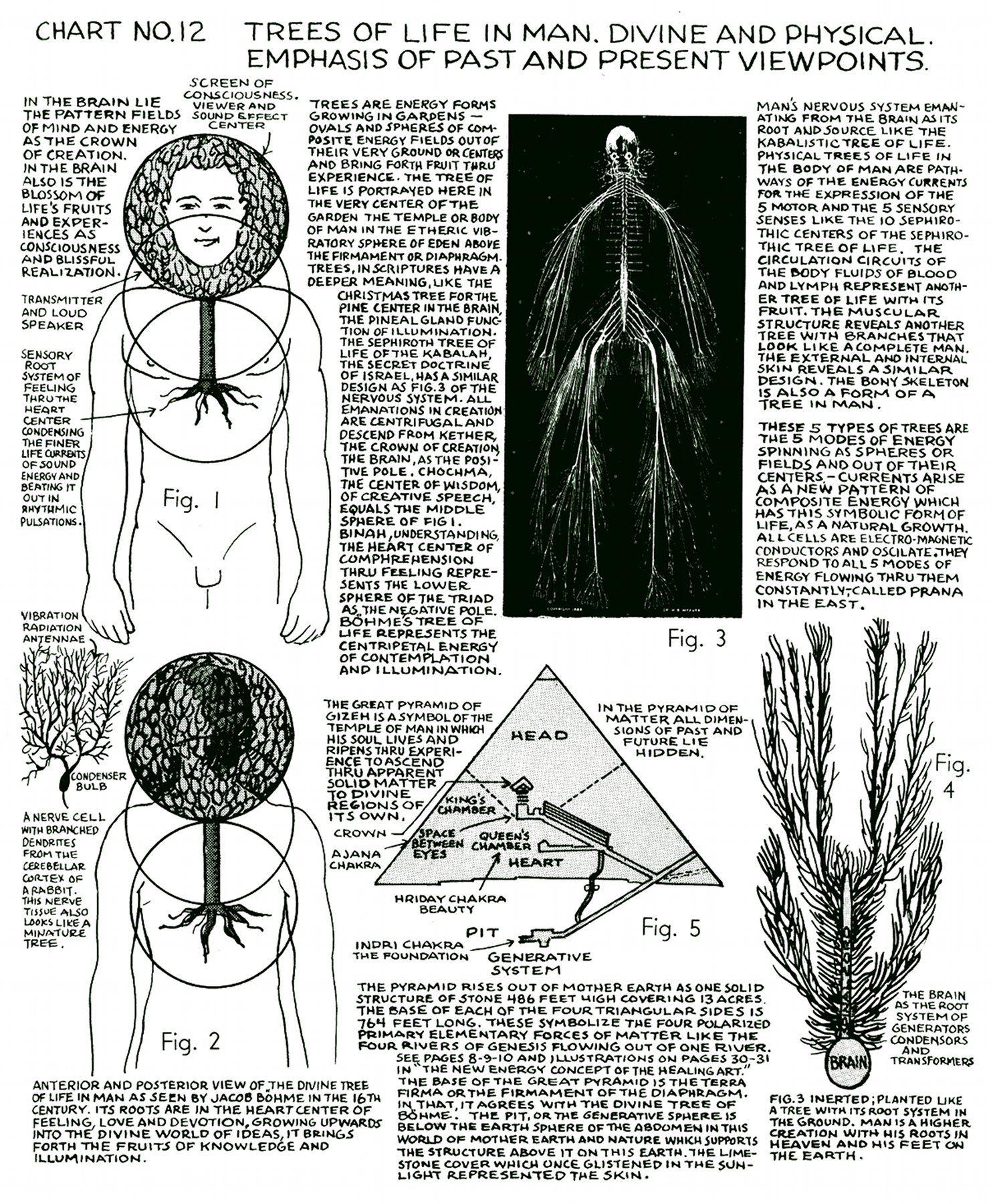 http://www.digitaldrstone.org/img/v1b2c12lg.jpg | Mtch - Acupuncture ...