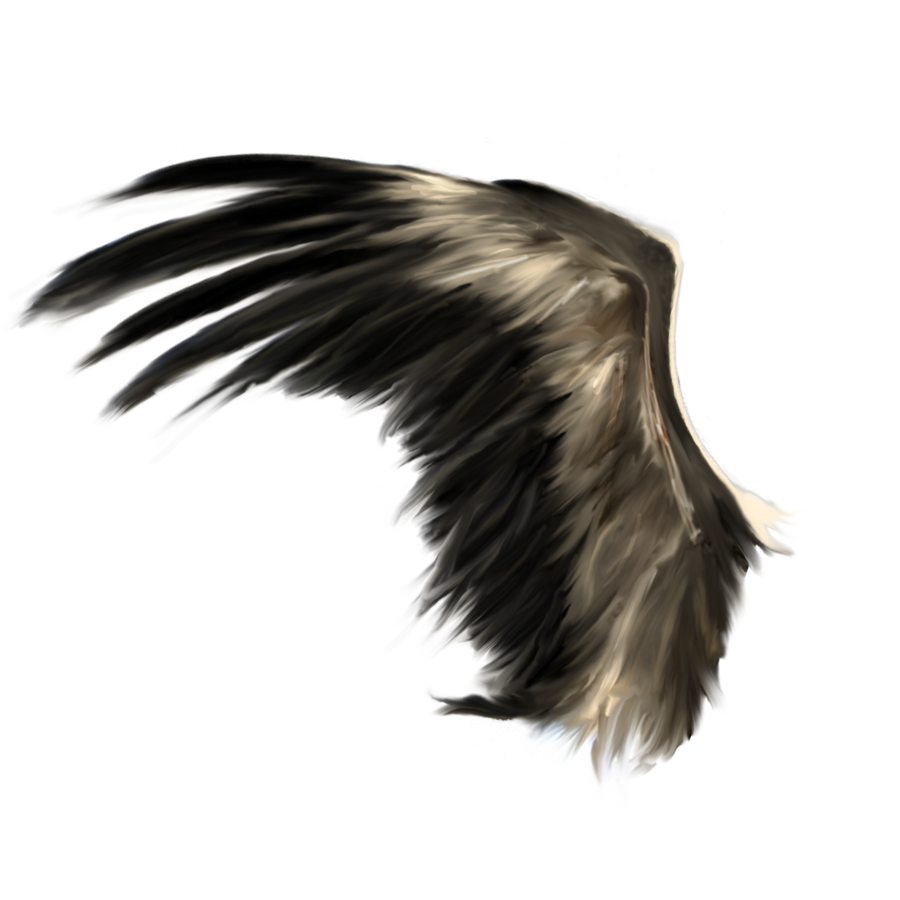 Wings 25 By Deniseworisch D5c0acgpng 900&215900  WINGS