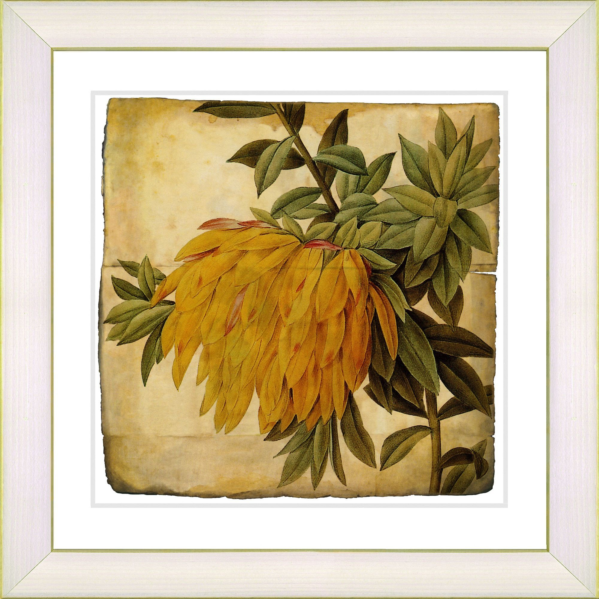 Vintage Botanical No. 44A by Zhee Singer Framed Giclee Print Fine ...