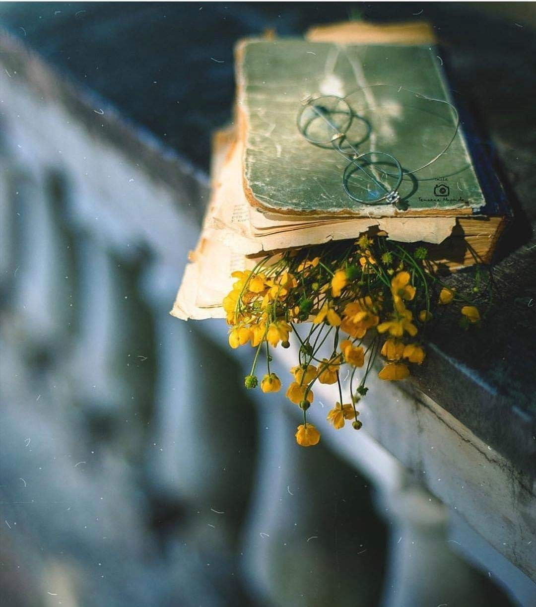 Pin by Linda Sumruld on Vintage Books Photography
