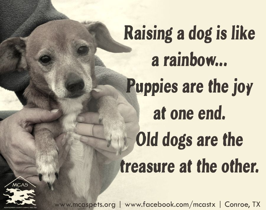 Such a treasure they are, too  :) #dogs | Beautiful Sayings