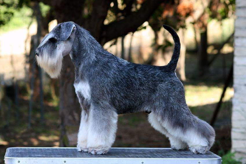 Teacup Maltese Puppies For Sale Teacup Puppies Maltese Maltese