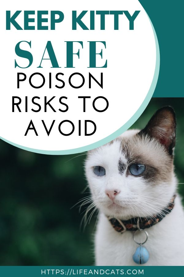 Top Poisoning Risks for Cats Cat care tips, Cat life
