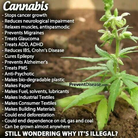 The many uses of the marijuana/hemp plant. Cannabis cures. #legalizeit PreventDisease.com