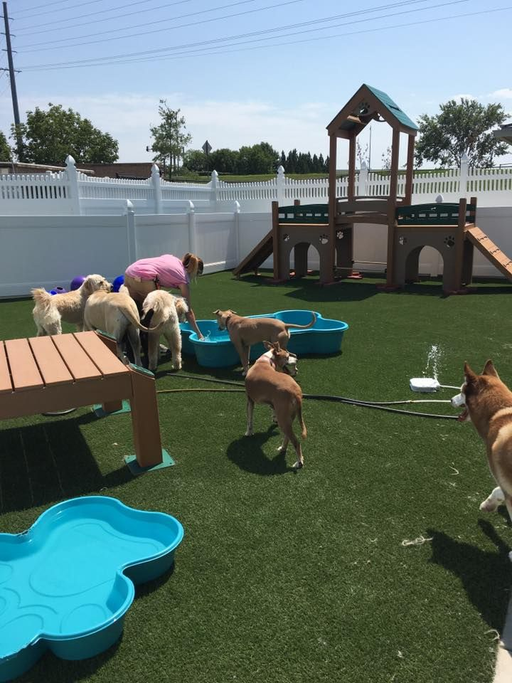 Yuppypuppypetspa Mo Ofallon Doggiedaycare Dogs Dog Daycare