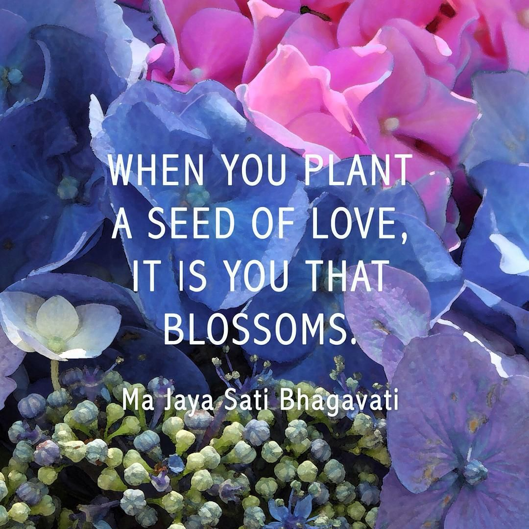 Plant Seeds Of LOVE. #love #pretty #flowers #quotes #seeds