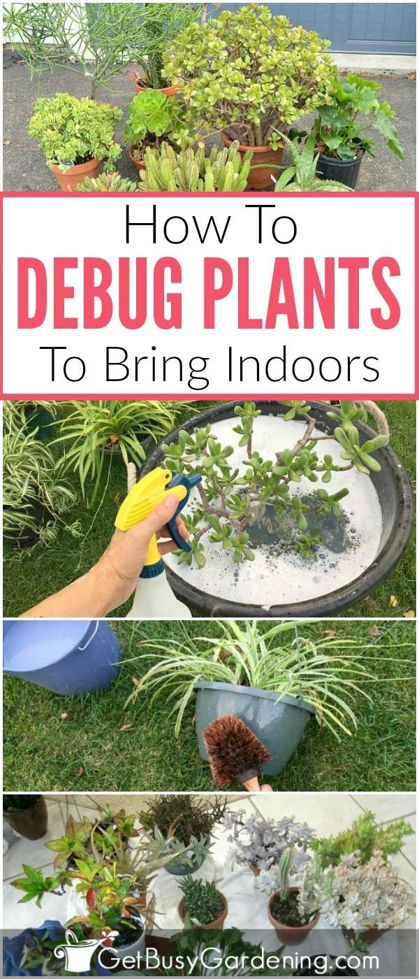 Enjoy Gardening Without The Breaking Your Back With This: How To Debug Plants Before Bringing Them Indoors