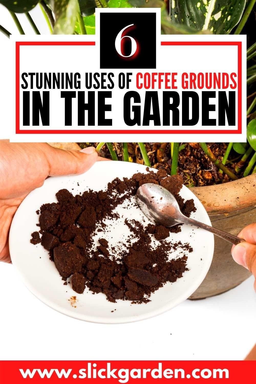 c454f5bc73c3b600ad8d0695b380e6fd - Coffee Grounds Good For Vegetable Gardens