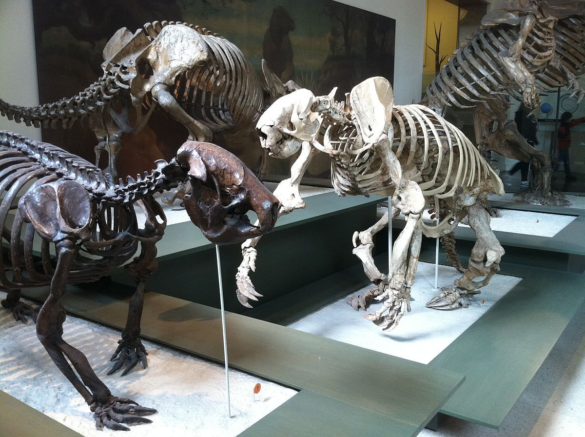 Pin by Viviana Shiroma on Lifestyle in 2020 Ground sloth