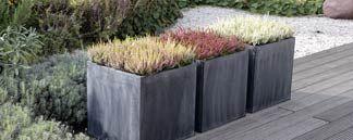 Moderne Bepflanzung für Terrasse und Garten