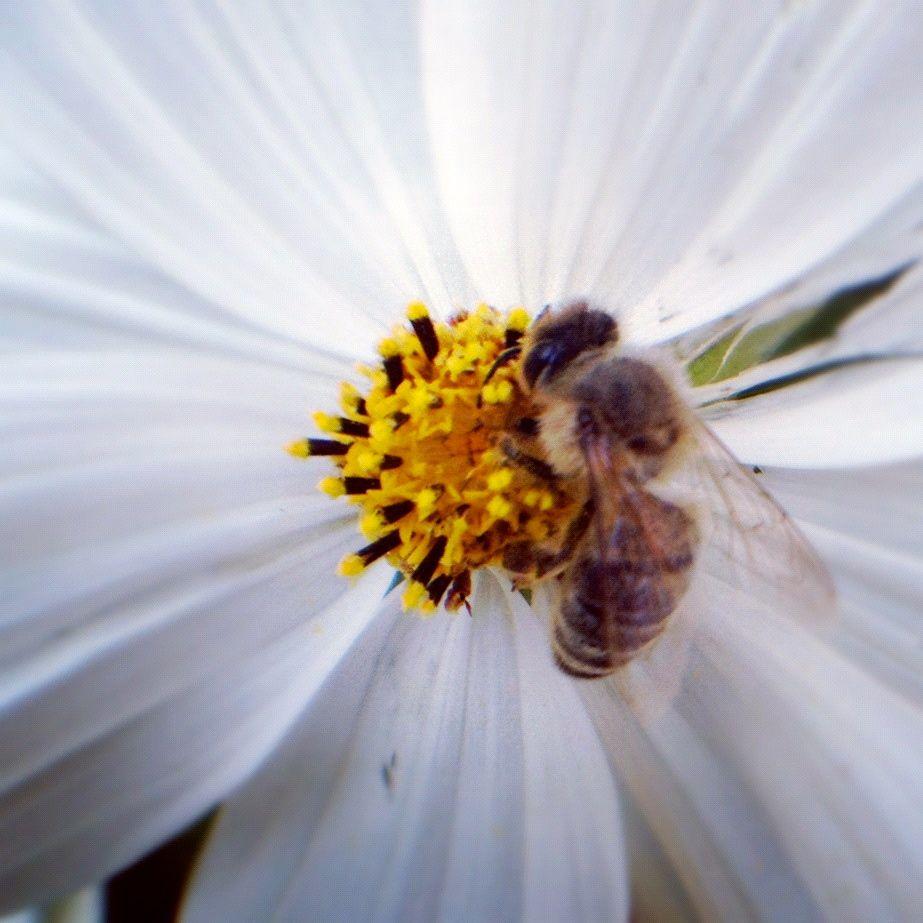 Fleißiges Bienchen.