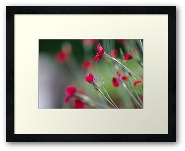 """""""Red Passion"""" by Thierry Wojtczak. Available for sale at http://www.redbubble.com/people/thierrywojtczak/shop"""