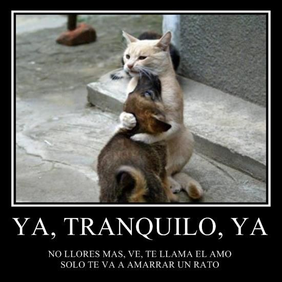 Perros Funny Animals Funny Animal Pictures Cute Animals
