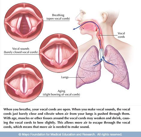 Changing Voice With Age Vocal Cord Dysfunction Vocal Cord Voice