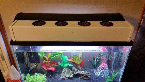 Aquaponic Fish Tank Topper How Does My Garden Grow