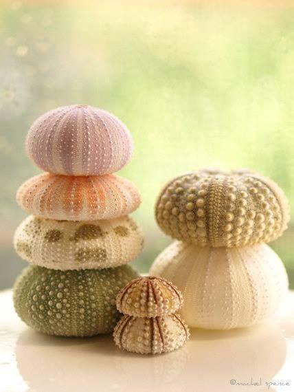 sea urchin decor.htm u r c h i n s t a c k sea urchin  ocean treasures  sea theme  u r c h i n s t a c k sea urchin