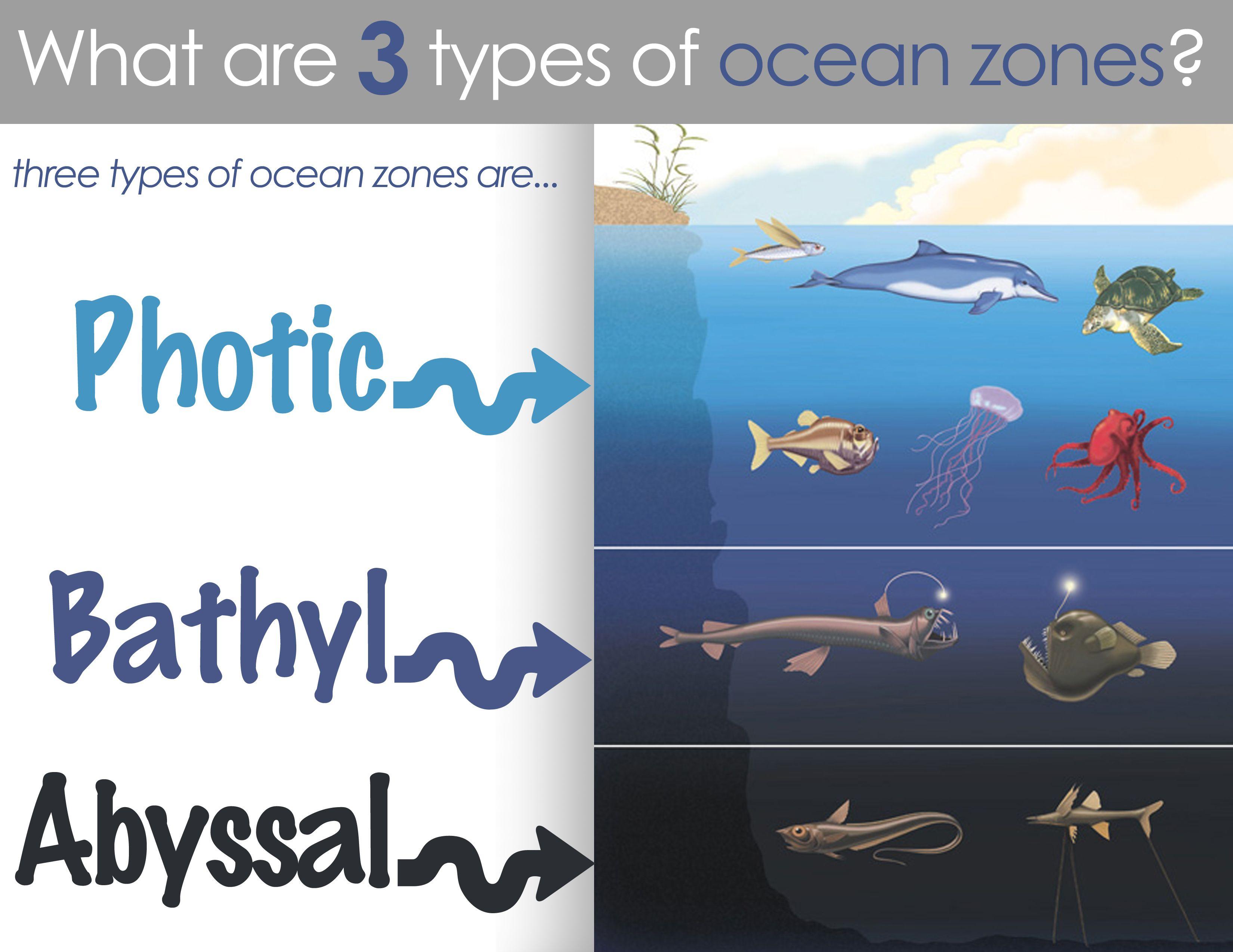 Classical conversations cycle 1 science week 19 ocean zones classical conversations cycle 1 science week 19 ocean zones sciox Images