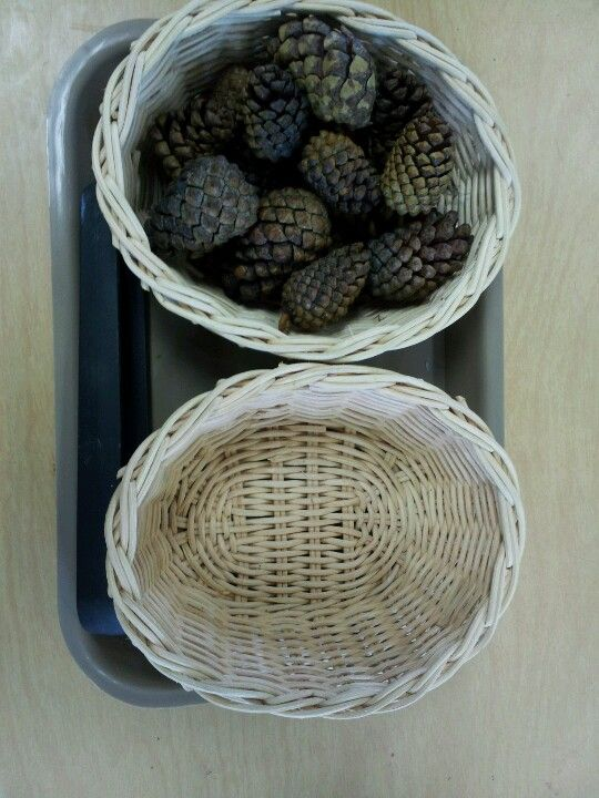 Christmas tray tasking -  Transferring small pinecones with tongs.