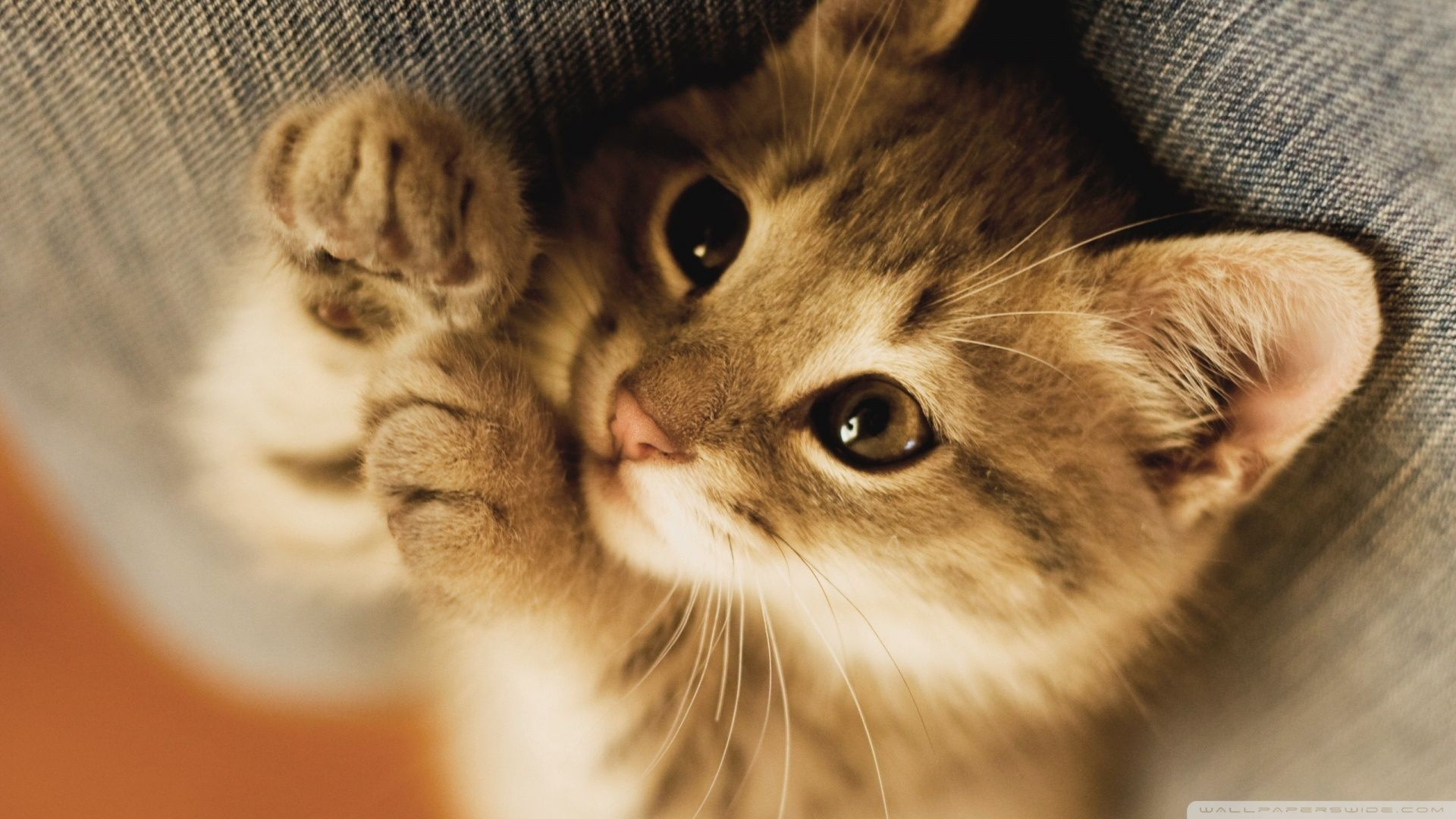 Pin by amelia cody on dance life pinterest kittens cute cats