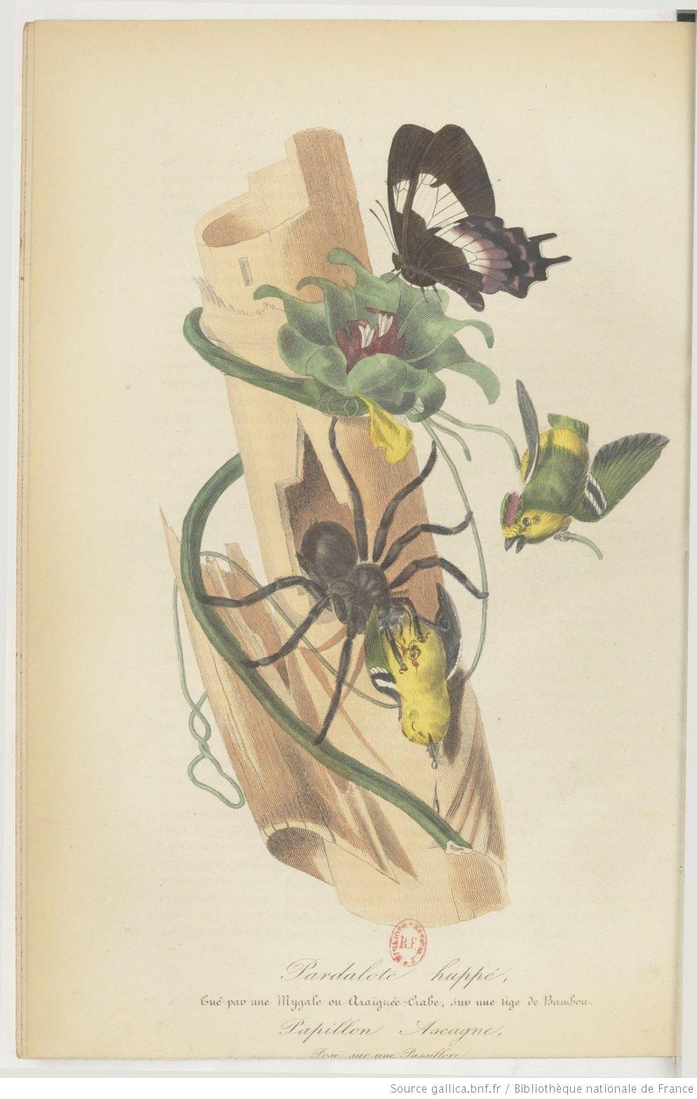 Le Jardin des plantes : description complète, historique et ...