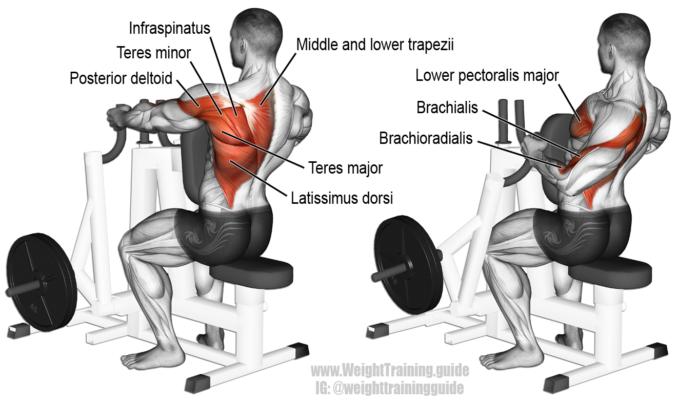 A compound exercise. Target muscle: None. Multiple muscles act in synergy.  Synergistic muscles: Latissimus Dorsi, Teres Major, Rhomboids, Middle and  Lower ...