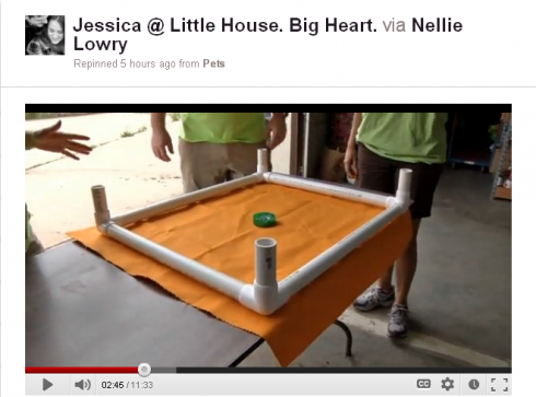 Video Showing How A Rescue Shelter In Columbus Ohio Makes Homemade Dog Beds Pvc Dog Bed Dog Bed Elevated Dog Bed
