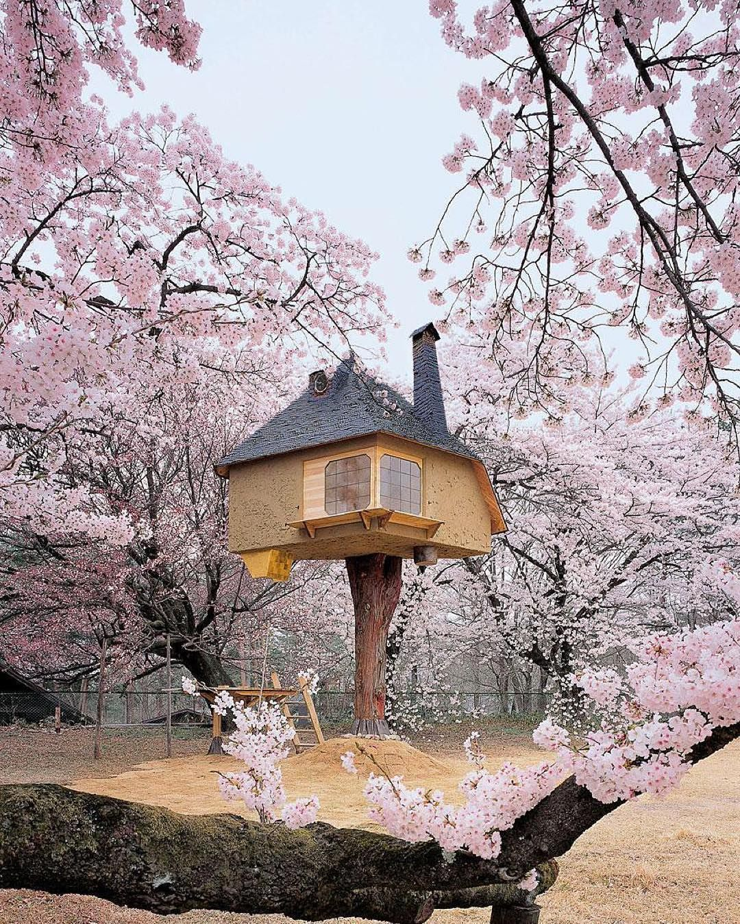 """Teahouse Tetsu tree house. This interior of this teahouse by architect Terunobu Fujimori is simple and modern, but the outside is pure fantasy. You can find Teahouse Tetsu surrounded by cherry blossoms at the Kiyoharu Shirakaba Museum, Hokuto City, Japan. Photo from the book: """"Tree houses: fairy tale castles in the air."""""""