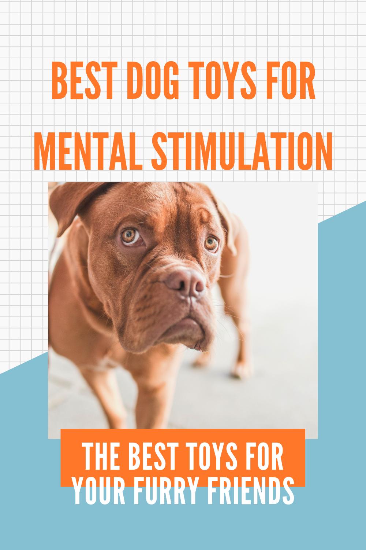 Interactive Dog Toys Best Dog Toys For Mental Stimulation!